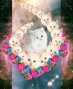 I can't drown my demons, they know how to swim. Cat Lover Gifts, Cat Gifts, Cat Lovers, Kitsch, Crazy Cat Lady, Crazy Cats, Galaxy Cat, My Demons, Space Cat