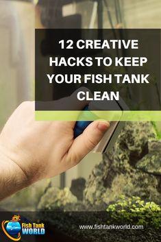 12 Creative Hacks to Keep Your Fish Tank Clean Tropical Freshwater Fish, Tropical Fish Aquarium, Tropical Fish Tanks, Aquarium Fish Tank, Freshwater Aquarium, Live Aquarium, Planted Aquarium, Aquarium Setup, Aquarium Design