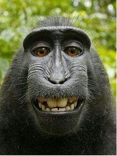Macaque borrows photographer's camera to take hilarious self-portraits A Macaque monkey borrows a camera and takes cute self portraits! LOVE itA Macaque monkey borrows a camera and takes cute self portraits! Primates, Mammals, Animals And Pets, Funny Animals, Cute Animals, Exotic Animals, Beautiful Creatures, Animals Beautiful, Beautiful Smile