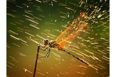 National Geographic    【Nature 自然・動物部門】最優秀賞+グランプリ  「水しぶき」 シクヘイ・ゴー