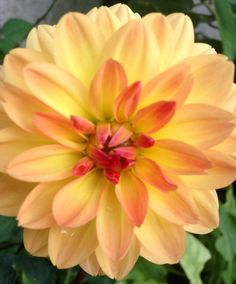 Dalia Plants, Spring, Flowers, Planters, Plant, Planting