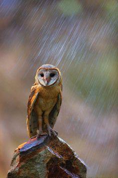 tect0nic: Raining.. by Kamran Saleem via 500px.