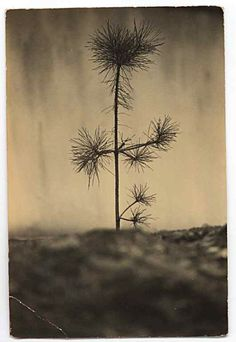 Masao YAMAMOTO, Japan  Masao Yamamoto carries his photographs around with him for weeks allowing them to become aged and so appear loved.