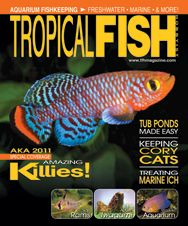 The killifish-themed June 2011 issue features articles on keeping, breeding, and conserving colorful killies, setting up an aquarium for cory cats, how to treat common marine ailments, and much more!
