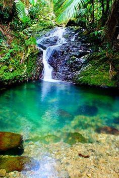 Bosque Toro Negro, Puerto Rico