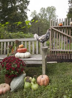 pumpkins, autumn, rooster, benches, setting