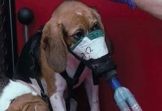 HOW,WHY WHO ??? So sad!!! SAY NO TO ANIMAL TESTING...............SEND A MESSAGE.
