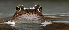 Amphibians, Reptiles, Funny Frogs, Frog And Toad, Butterflies, Insects, Prince, Colorful, Photo And Video