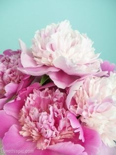 Pink Peonies  - Peonies are one of my mama's favorite flowers.  Always think of her when I see them.  They grew in her grandmother's garden in PA when she was little.