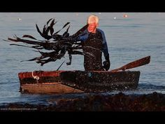 Seaweed Farming - Radio documentary of a visit with Larch Hanson, seaweed harvester and mystic in Steuben, Maine.