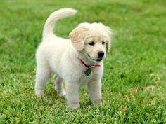 perritos en paisajes - Yahoo Image Search Results