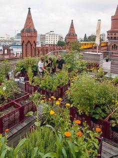 Dachgarten - Dachgartenideen - Dachgartenbepflanzung