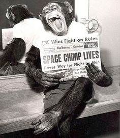 A space chimp posing to camera after a successful mission to space, 1961