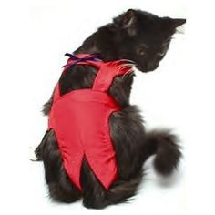 Joybies Red Piddle Pants for Small Cat Measuring 1315 Along Back From Collar to Base of Tail *** Learn more by visiting the image link. Diaper Liners, Pet Sweaters, Fancy Cats, Blue Bow, Navy Blue, Red Cat, Dog Diapers, Small Cat, Pet Costumes