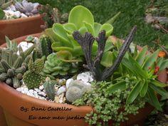 Composição suculentas  By: Dani Castellar Eu amo meu jardim