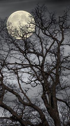 ∞Treetop Moon by Gene Linzy / 500px