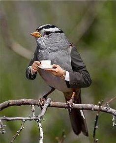 Bird with a tea cup