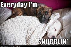 sweet doggies