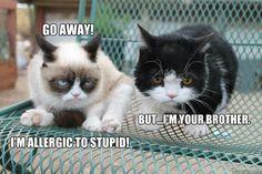 Go away! I'm allergic to stupid!