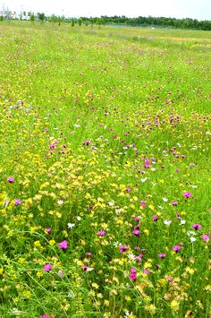 Wild flowers in Summer - a sight I will definitely miss when I leave this place...