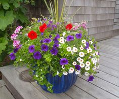 Nantucket Window Boxes and Containers for your Nantucket Home