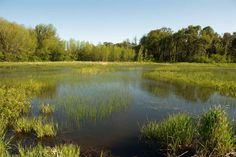 Beautiful landscape of green swamp with calm waters.  God created unique flora and fauna for each ecosystem.