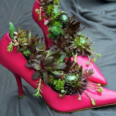 Hens and Chicks Strut their Stuff