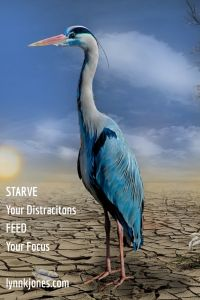 Starve Your Distractions Feed Your Focus - www.Lynnkjones.com