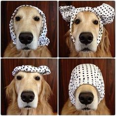 Remember: A simple headscarf can jazz up any outfit.