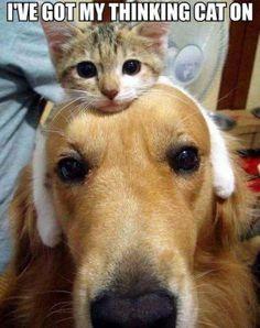 Bahahahaha... #funnyanimals  #humor #funny #lol #captions #animals