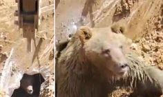 Workmen in Turkey find bear emerging from hole