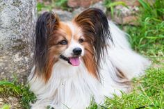 Dogs aren't just pets, they're part of your family. And despite efforts to keep…