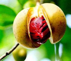 A noz-moscada não é o fruto da moscadeira, mas a amêndoa que o seu fruto encerra. Especiaria muito usada na Índia, foi introduzida no ocidente pelos árabes, no Brasil é cultivada no Sul da Bahia. A noz-moscada possui cerca de 10% de óleo essencial, composto principalmente por hidrocarbonetos.