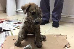 Pascal, the puppy who was found covered in glue and left to die, has found a new home. The dog, who captured the hearts of the world after he was brought into an Istanbul animal rescue covered in g…