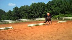 """""""Have you tried to do a haunches in or out with your horse? At first, you will…"""
