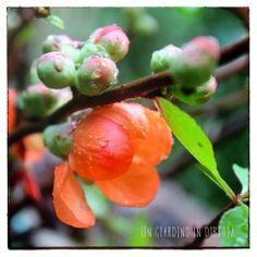 E sono tre!  Nuovo post sul blog Un Giardino In Diretta http://giardinoindiretta.blogspot.it/2014/04/e-sono-tre.html #giardinieri #blog #giardinoindiretta