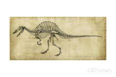 Spinosaurus Study Posters par Ethan Harper sur AllPosters.fr