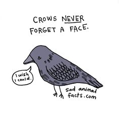 Sad Animal Facts are the cutest  way to ruin your day by Brooke Barker