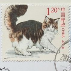 awesome Chinese cat stamp