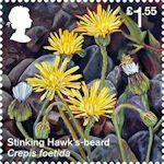 Reintroduced Species £1.55 Stamp (2018) Stinking Hawks-beard