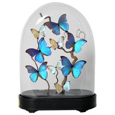 Large Vintage French Butterfly Display Cloche | See more antique and modern Taxidermy at http://www.1stdibs.com/furniture/more-furniture-collectibles/taxidermy