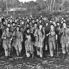 The Women's Timber Corps, part of the Women's Land Army, in 1943