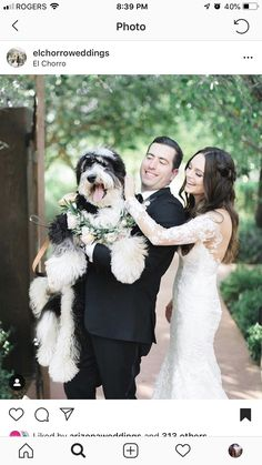 An adorable flower dog. the only thing that could compete with Style 😉⁠ . Bridal Boutique, Wedding Tips, Wedding Season, Wedding Designs, Flower Dog, Gowns, Wedding Dresses, Lace, Dress Ideas