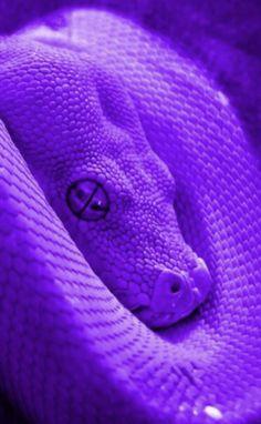 Beyond creepy snake Dark Purple Aesthetic, Violet Aesthetic, Lavender Aesthetic, Neon Aesthetic, Snake Wallpaper, Purple Wallpaper Iphone, Neon Wallpaper, Aesthetic Iphone Wallpaper, Dark Purple Wallpaper