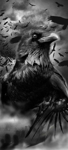 Ravens and crows black and white art crow Art raben black crows Robert diy tattoo images tatt Crow Art, Raven Art, Bird Art, Vikings, Diy Tattoo, Tattoo Ideas, Black Tattoos, Cool Tattoos, Fenrir Tattoo
