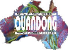 quandong www.quandong.space