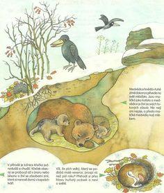 Winter Activities For Kids, Forest Theme, School Daze, Art Lessons Elementary, Stuffed Animal Patterns, Rock Art, Social Studies, Animal Pictures, Art For Kids