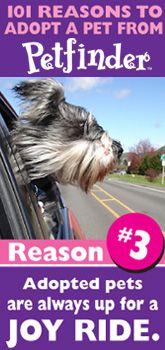 SM Promo Idea: Reasons to Adopt a Pet