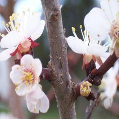 """Saatchi Art Artist Jill Johnson; Photography, """"Apple Blossoms"""" #art"""