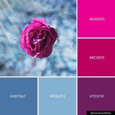 Love this palette for an Afghan blanket or throw! Beach Color Palettes, Blue Colour Palette, Blue Color Schemes, Color Combos, Winter Color Palettes, Branding, Color Bordo, Purple Pink Color, Purple Rose